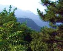 八仙山次生林自然保护区